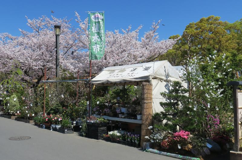 大阪城公園植木市